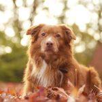 Hondenfotograaf - huisdierenfotograaf - huisdierfotograaf - gezinsfotograaf