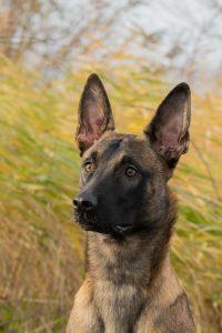 Honden fotograaf - fotograaf klundert - huisdierfotograaf zevenbergen - fotograaf moerdijk