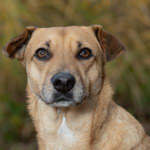 Honden fotograaf zevenbergen - huisdierenfotograaf - huisdierfotograaf - gezinsfotograaf