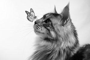 huisdierfotograaf klundert - huisdier fotograaf klundert - hondenfotograaf - huisdier fotograaf - fotograaf